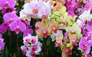 Чтобы цвели орхидеи