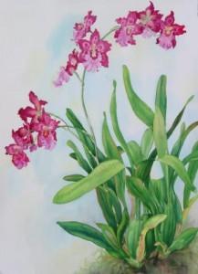 Орхидея Вайлстекеара